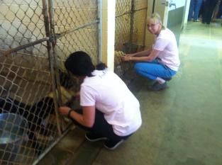 Kennels at Canine Assitants